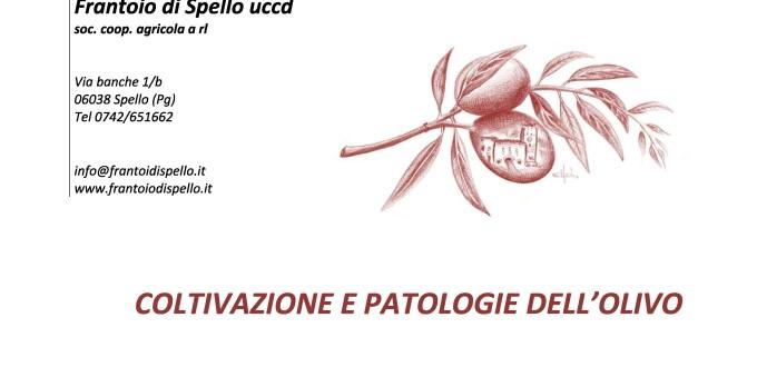 Coltivazione e patologie dell'olivo-page-0
