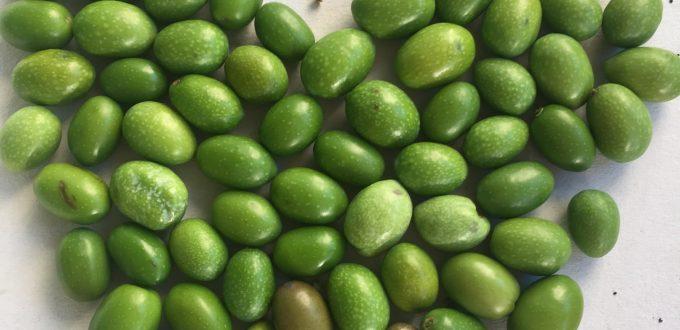 Cuore di olive